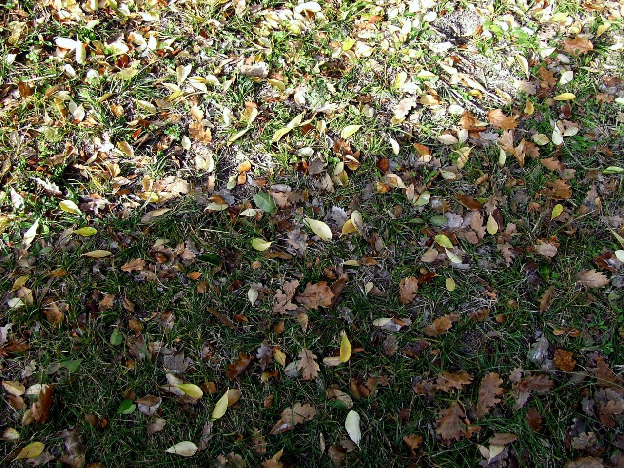 Asques, c'était l'automne 2011 et la chute des feuilles