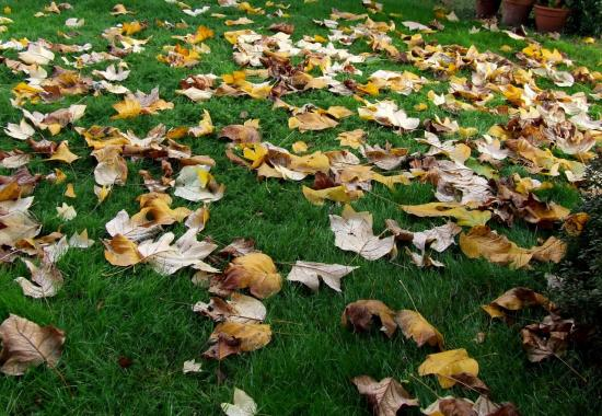 Saint-Genès-de-Fronsac, des feuilles mortes.....