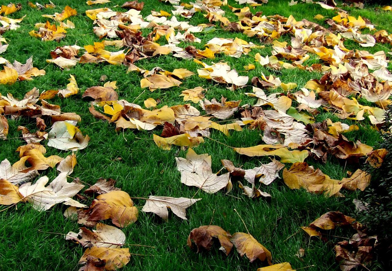 Lugon-et-l'Ile-du-Carney, des feuilles mortes