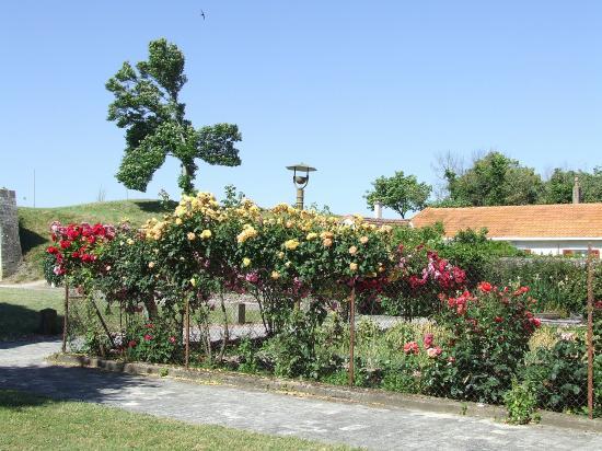Brouage, c'est un véritable mur de roses.