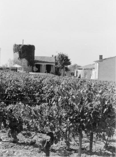 Saint-Emilion, revêtu de lierre, un ancien moulin.