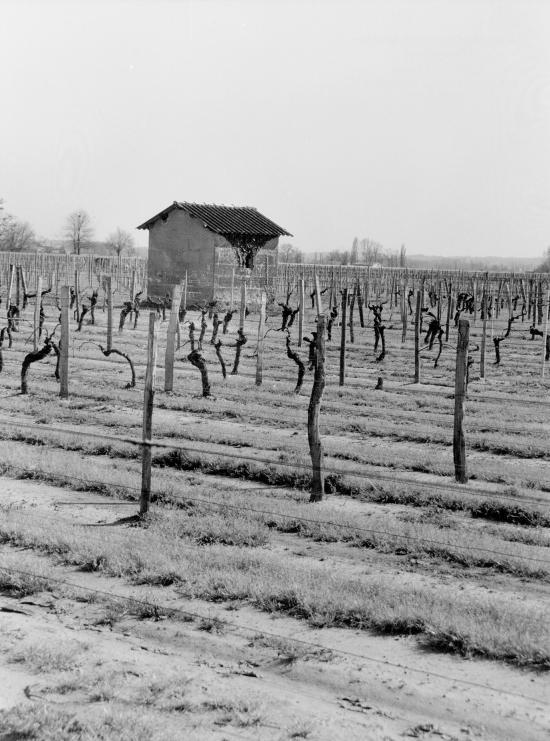 Vignonet, une cabane de vigne.