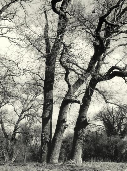Arveyres, la Commanderie, des arbres