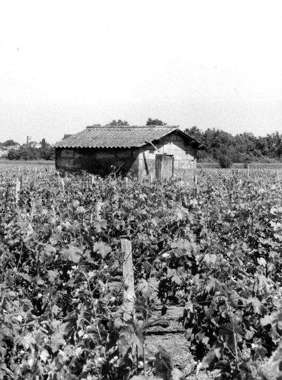 Arveyres, une petite maison de vigne sur la route de Génissac