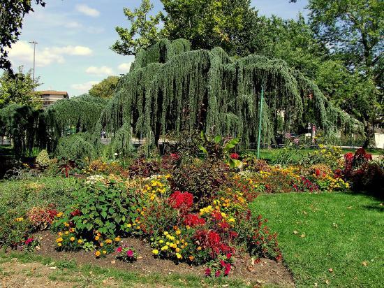 Le square, des arbres et des fleurs.