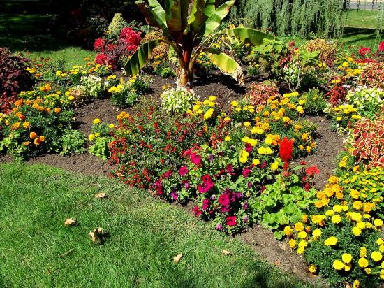 Le square, magnifique parterre de fleurs.