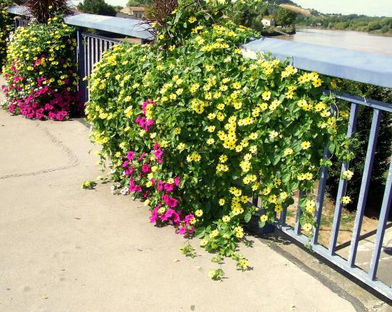 Sur le pont, un ensemble de vasques fleuries.