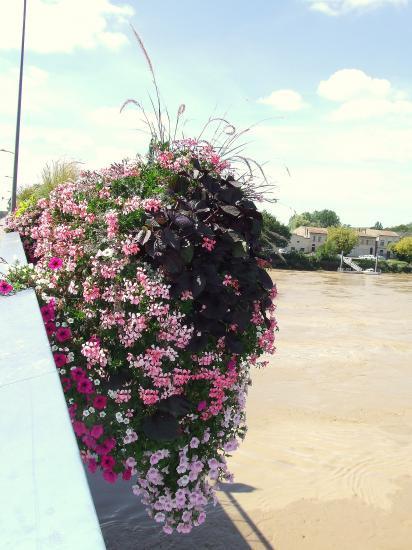 Une vasque fleurie.