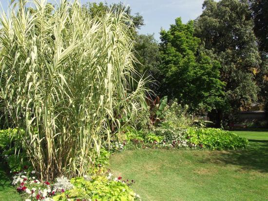Le square: des bambous et des arbres.
