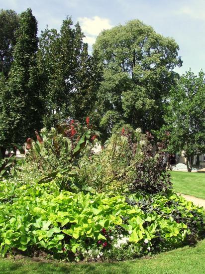 Square du 15ème Dragon: des arbres.